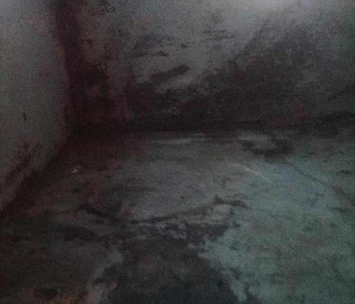 Dampness Means Mold in a Concord Basement