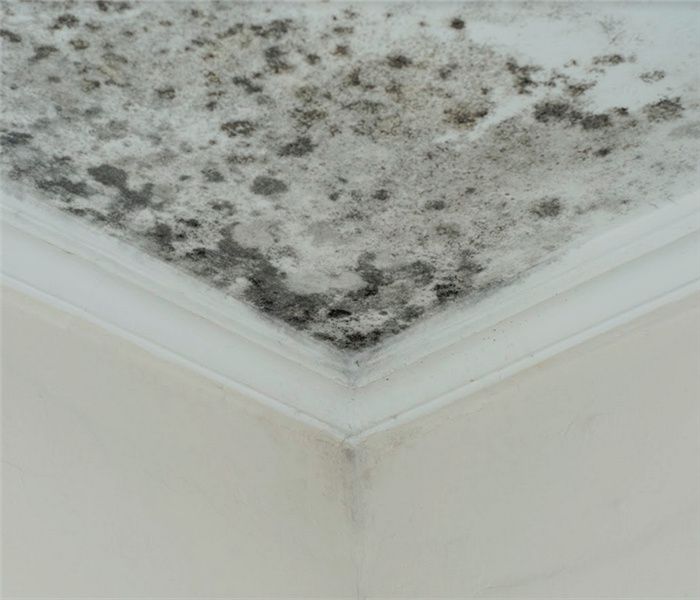 mold growing in the corner of the room