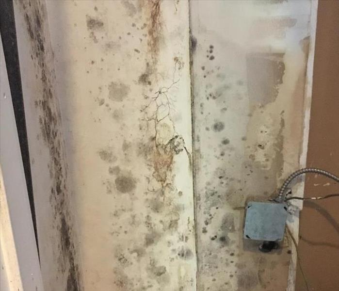 Mold Remediation Concord Condo Suffers Water and Mold Damage