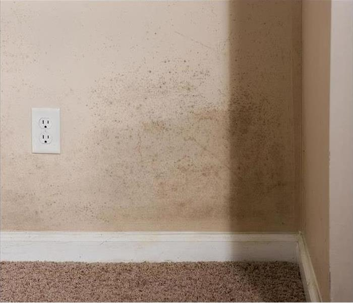 Mold Remediation Remediation to Mold Infestations