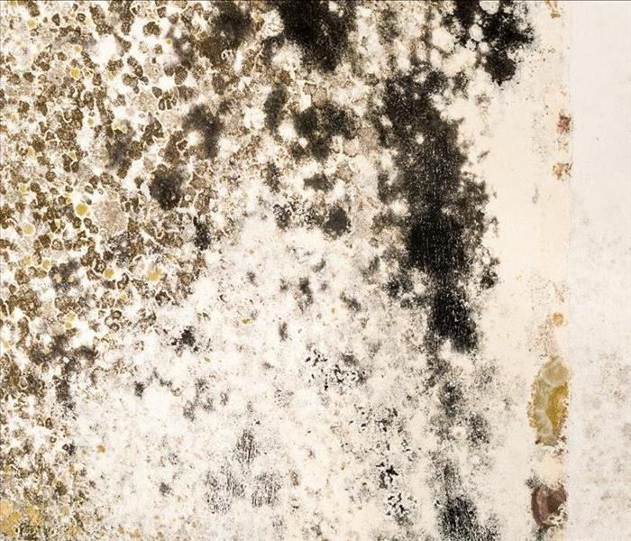 Mold Remediation What Should You Do If You Find Mold In the Attic Of Your Marlborough Home?