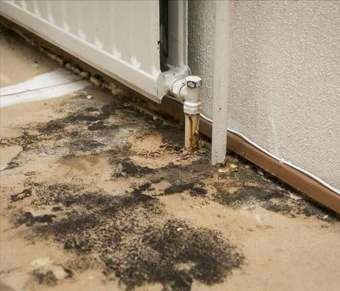 Mold Remediation The Discovery of Black Mold In Your Concord Home